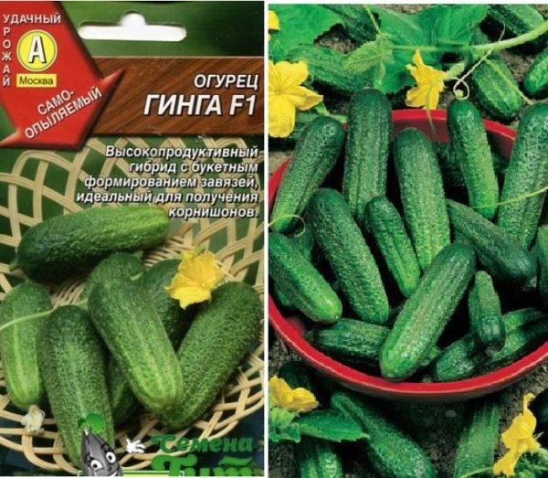 Огурец беттина f1: описание, отзывы, фото, характеристика сорта, урожайность