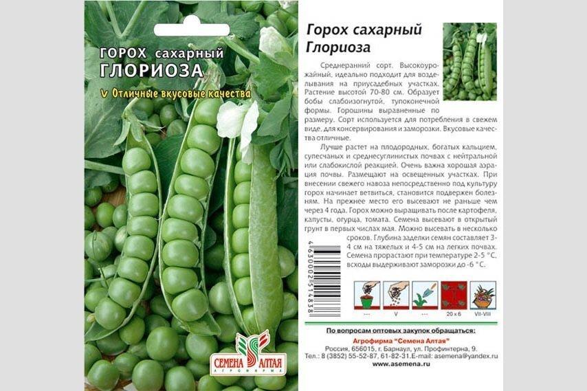 Горох всё лето. посадка, уход, выращивание. фото — ботаничка.ru