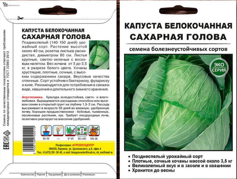Лучшие сорта поздней капусты: идеальные кандидаты для зимнего хранения