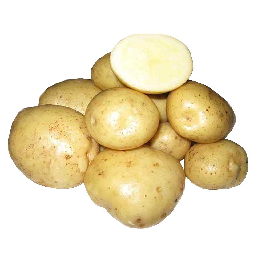 Картофель вектор: характеристика и описание сорта с фото