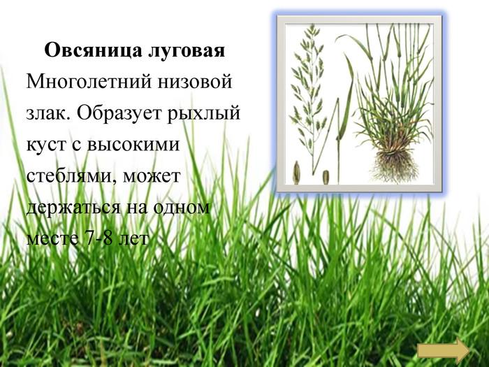 Какие виды трав подходят для газона? травосмеси для разных видов газонов