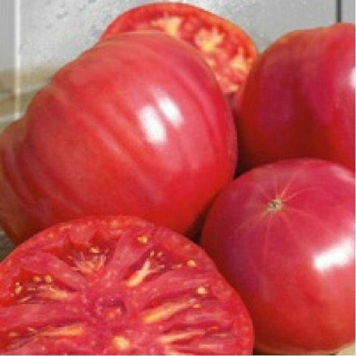 Розовые и малиновые томаты: 16 отменных салатных сортов. описание, фото