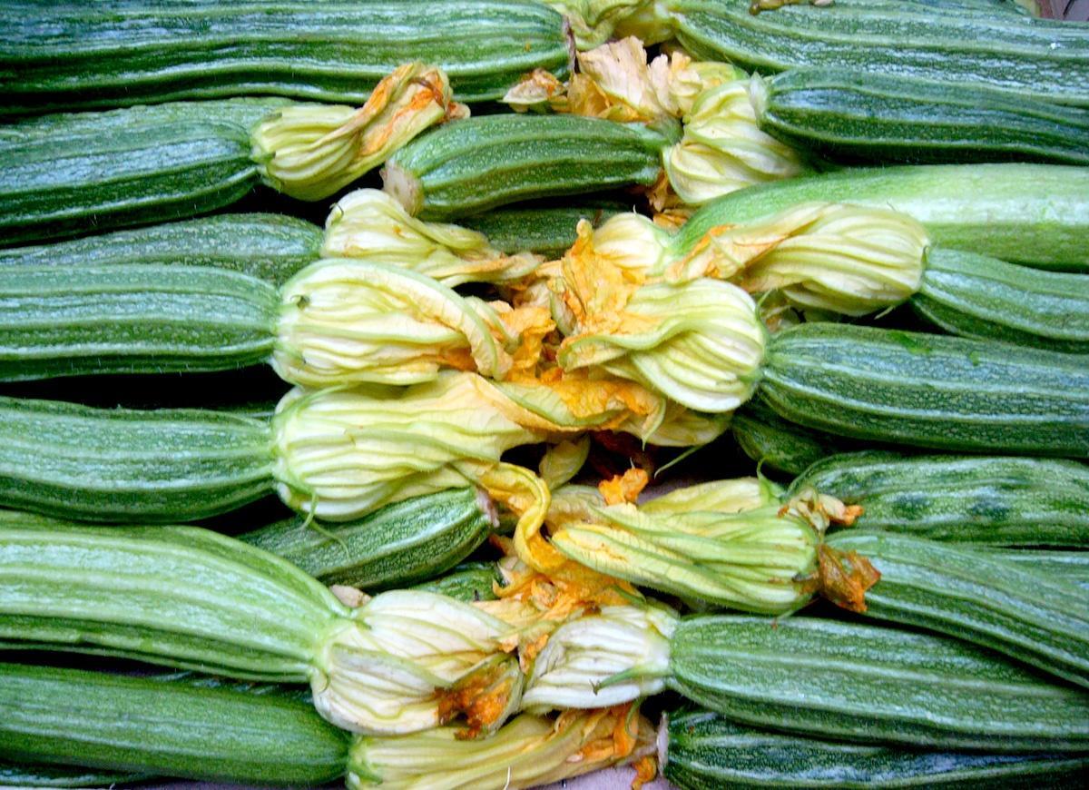 5 моих любимых сортов и гибридов кабачков-цукини. описание, фото — ботаничка.ru
