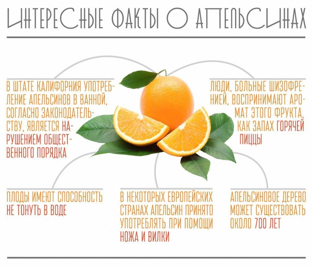 Зеленый чай: польза и вред — научные данные :: здоровье :: рбк стиль
