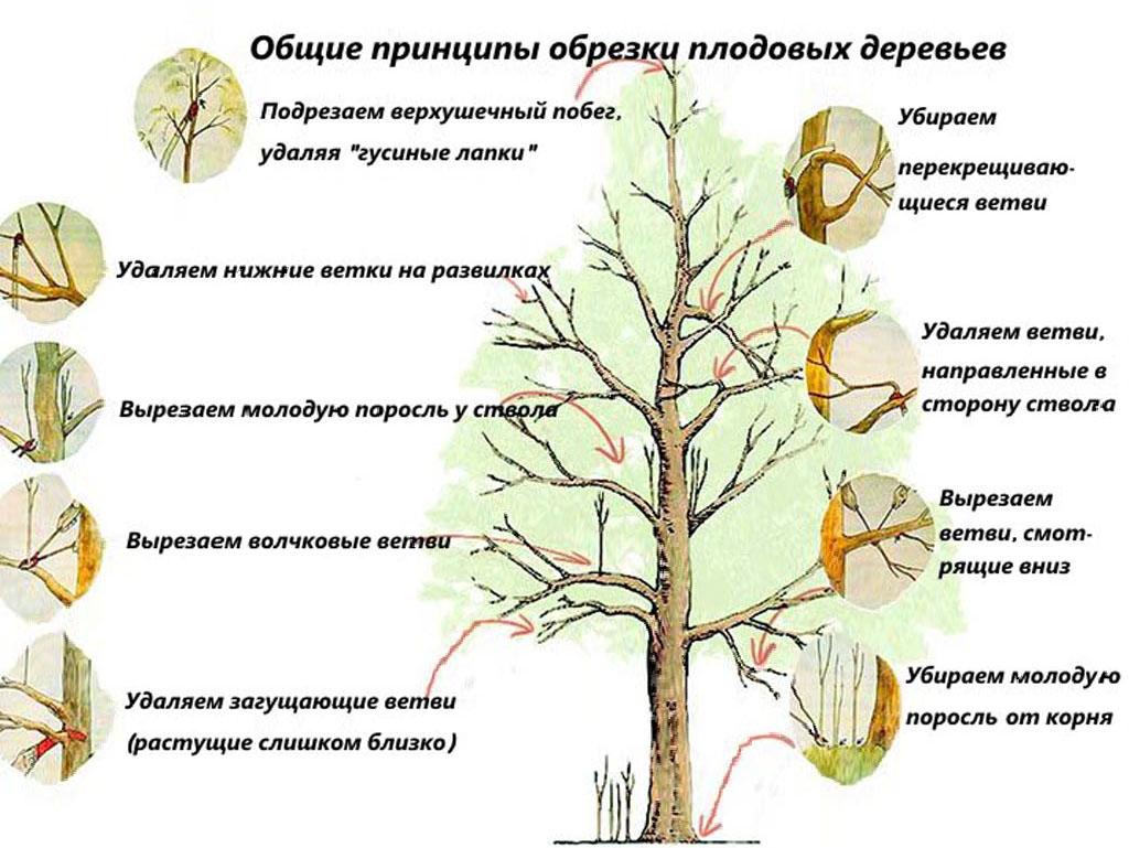 Пересадка яблони – важная часть ухода за деревом
