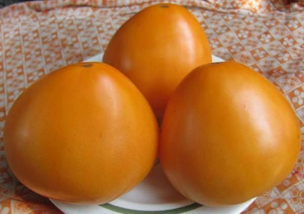 Томат оранжевое сердце: описание сорта, отзывы, фото, характеристика   tomatland.ru