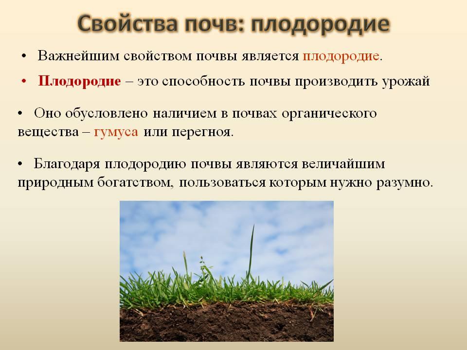 Восстановление плодородия почвы – как оздоровить землю