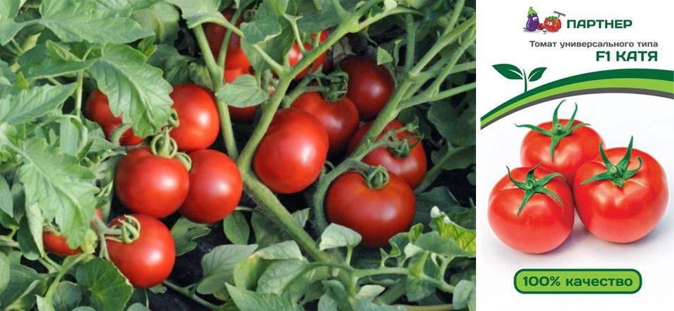 Сорт томата катюша