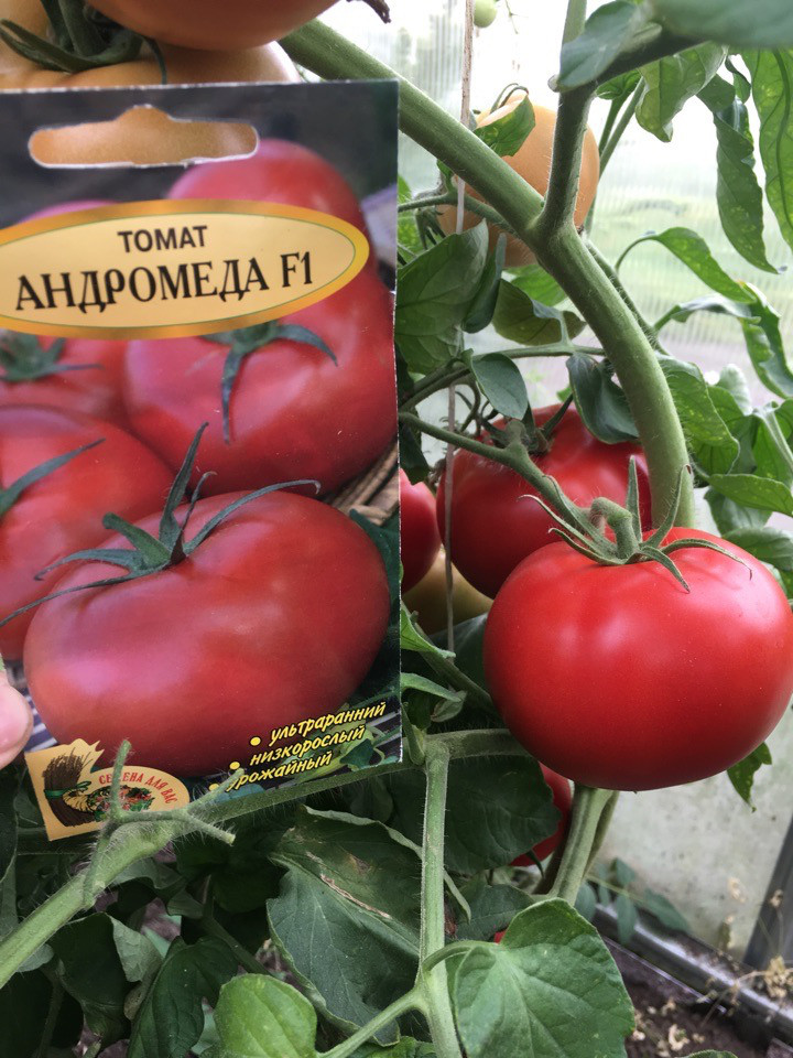 Томат андромеда характеристика и описание сорта - садоводству да