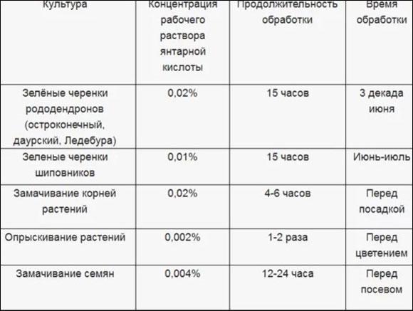 Янтарная кислота для огурцов: дозировка и применение для подкормки