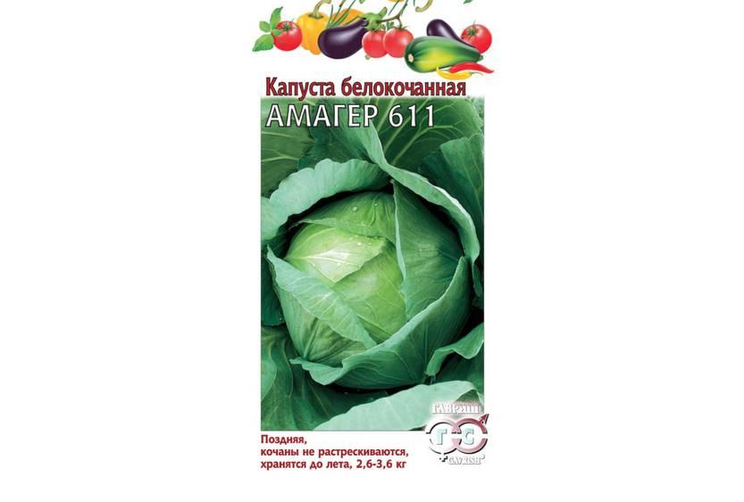 Капуста «амагер 611»: характеристика сорта и рекомендации по выращиванию