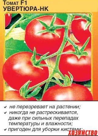 Описание сорта томата этюд нк, его характеристика и урожайность - всё про сады