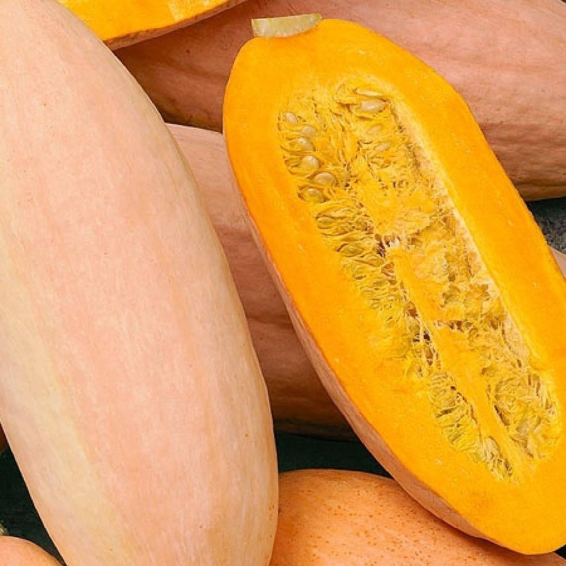 Описание сорта тыквы розовый банан, особенности выращивания и ухода - всё про сады