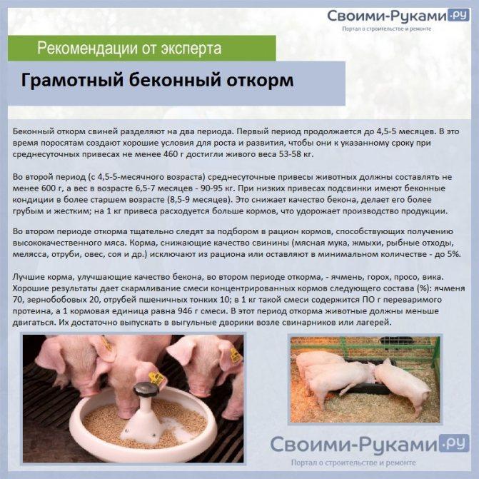 Свиноводство как отрасль животноводства | cельхозпортал