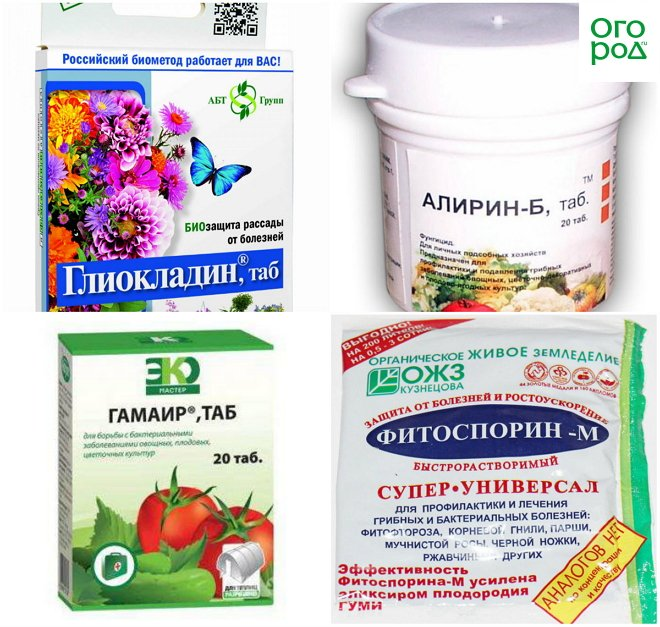 Фунгициды (для растений): классификация, вещества и действие, препараты
