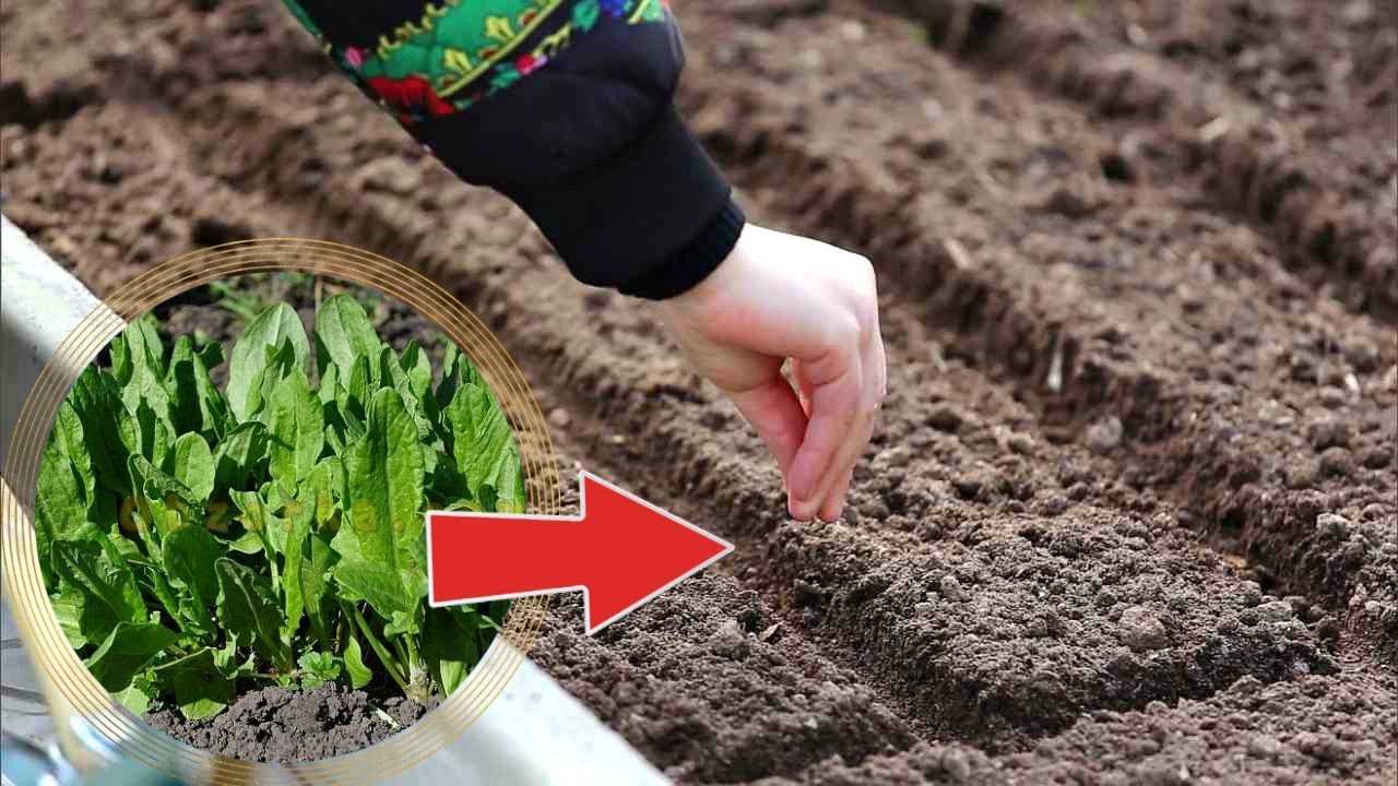 Сажаем осенью и сеем под зиму: список цветов и овощей для посадки