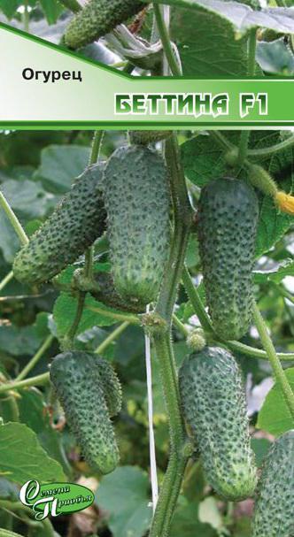 Огурец беттина f1: описание сорта, фото, отзывы, урожайность