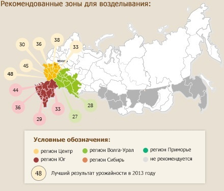 Лучшие сорта кукурузы для любых регионов россии