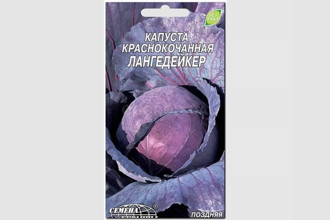 Выращивание капусты в открытом грунте: пошаговое описание, уход и посадка капусты (105 фото)