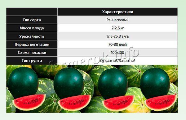 Технология выращивания арбуза огонек