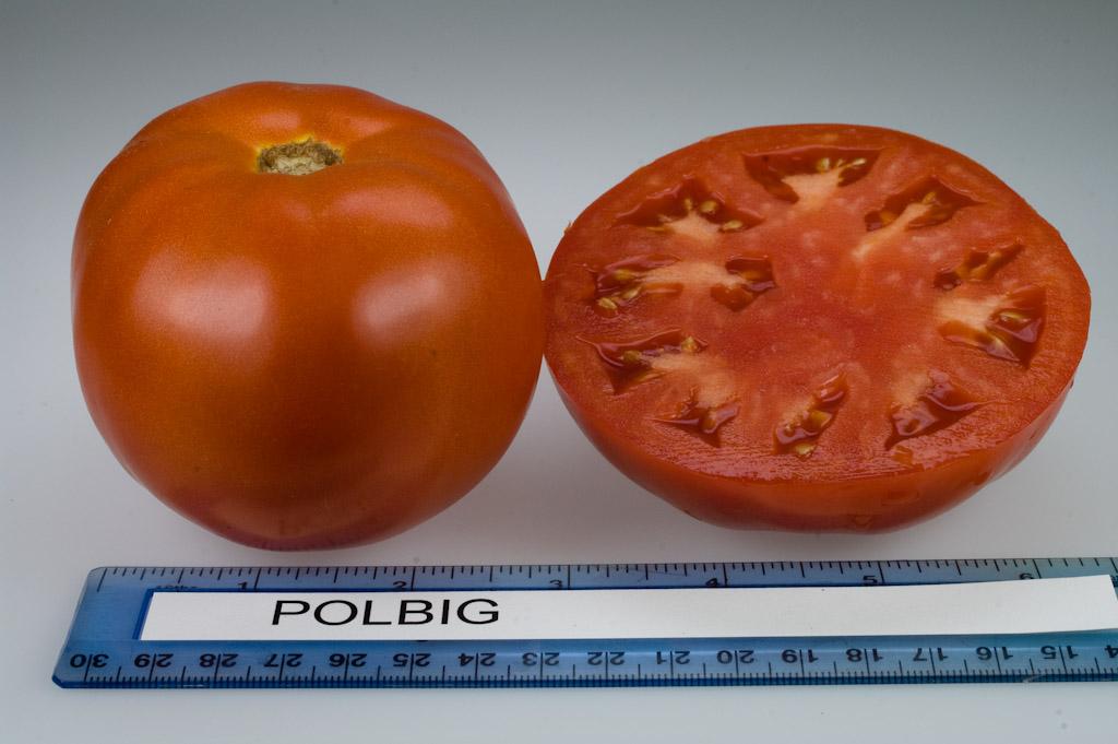 Томат «полбиг f1»: характеристики, особенности выращивания и отзывы