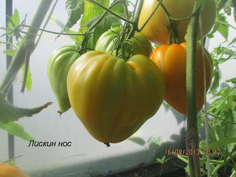 Описание сорта томата оранжевое сердце (лискин нос), особенности выращивания и ухода