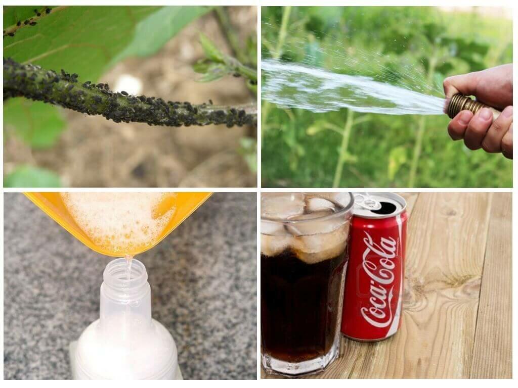 Как избавиться от тли на вишне