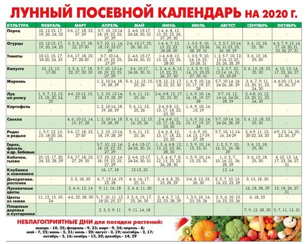 Когда сажать огурцы на рассаду в 2021 году по лунному календарю: благоприятные дни для посадки семян в домашних условиях и в открытый грунт