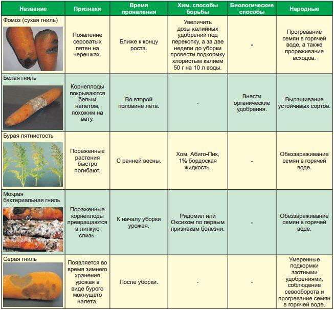Болезни и вредители моркови и методы борьбы с ними