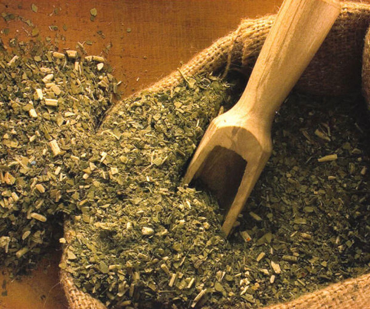 Парагвайский чай (падуб): из чего парагвайцы делают сосуд для мате, полезные свойства напитка в тыкве из листьев