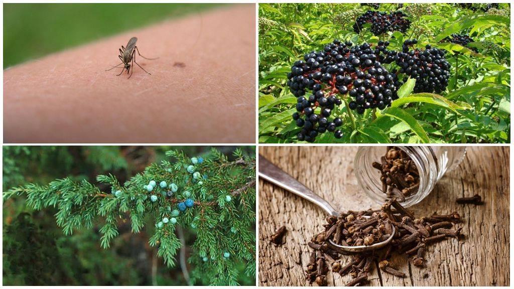 Как вывести пчел с дачного участка, дома или балкона