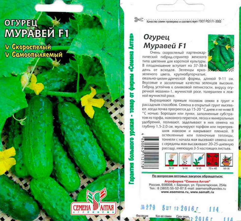 Огурцы: описание 29 сортов, основные характеристики и отзывы садовод о них | (фото & видео)
