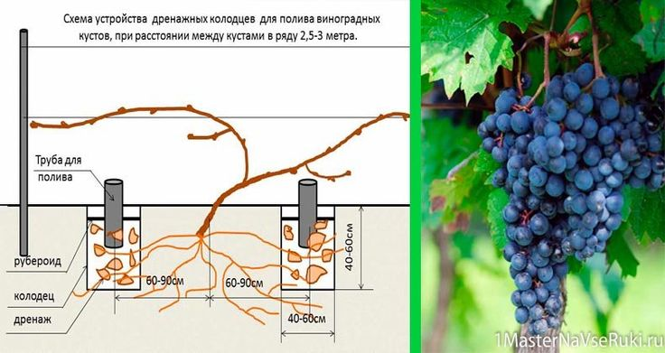 Пришла весна — поливаем виноград