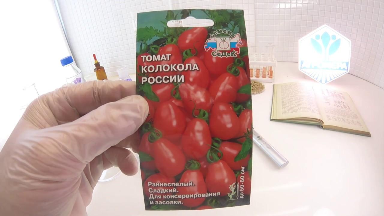 Описание и характеристики сорта томата колокола россии - всё про сады