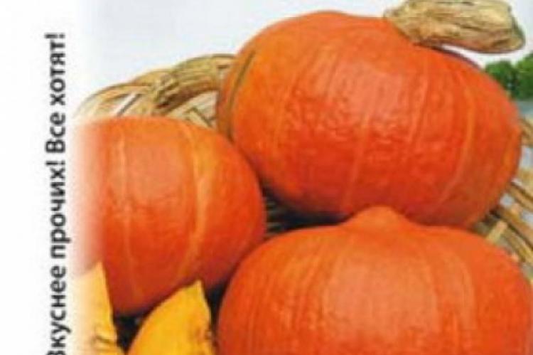 Выращивание тыквы в открытом грунте: правила, особенности ухода, советы
