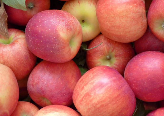 Яблоня гала и гала маст: описание сорта, выращивание, фото, отзывы