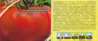 Описание сорта томата толстой f1, его характеристика и урожайность