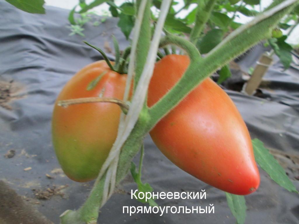 Томат корнеевский — описание сорта, отзывы, урожайность