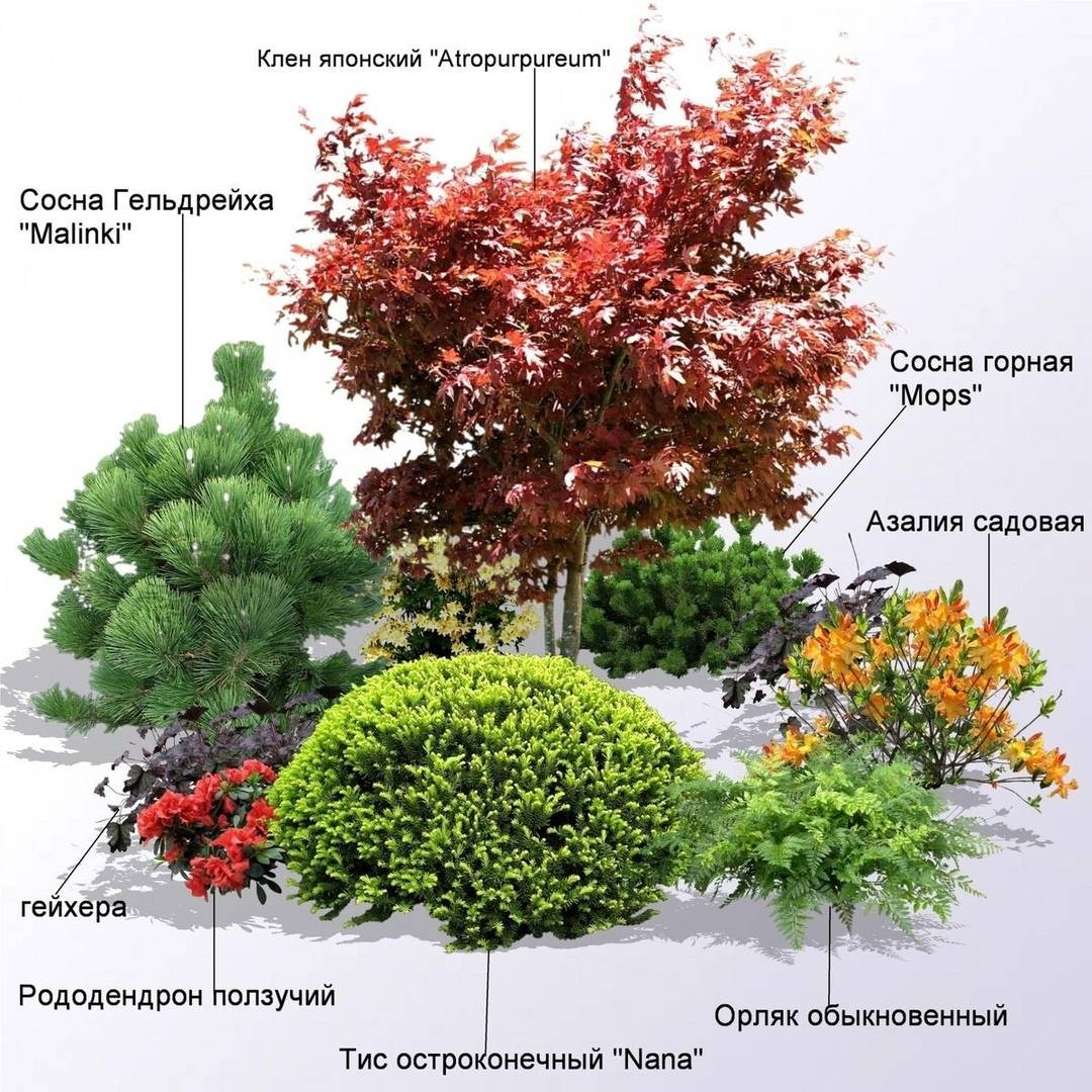 Принципы подбора растений для сада, клумбы, цветника, миксбордера