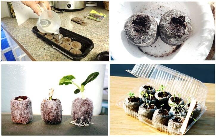 ✅ выращивание рассады томатов в торфяных таблетках. как сажать и выращивать томаты в торфяных таблетках - живой-сад.рф