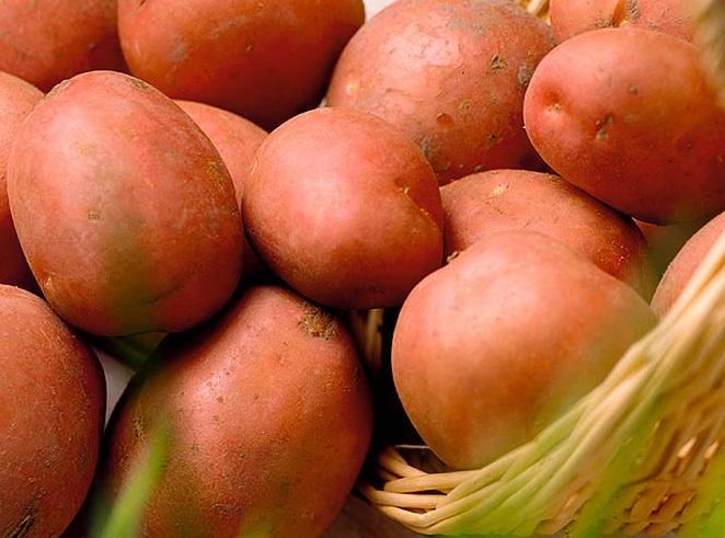 Розовый картофель «журавинка»: описание сорта и отзывы о выращивании