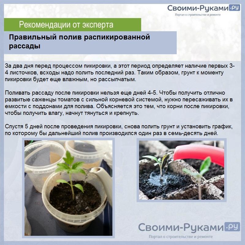 Чем подкормить томаты после пикировки - сам себе сад