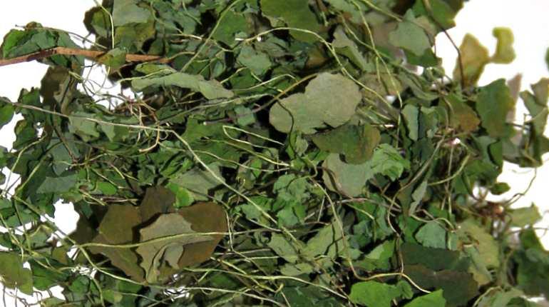 Крапива - полезные свойства, состав и противопоказания (+9 фото)