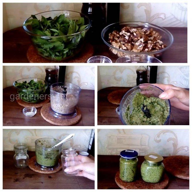 Как хранить базилик долго свежим в холодильнике и иных местах, как заготовить зелень на зиму в домашних условиях, можно ли заморозить, какие рецепты использовать?