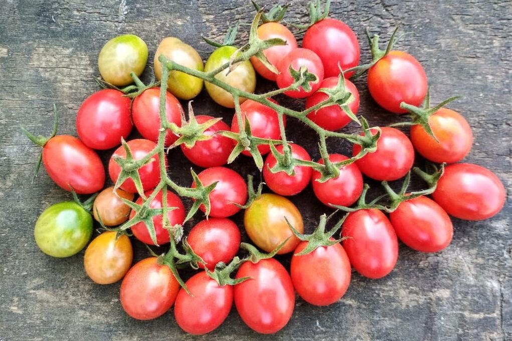 Описание самых лучших, сладких и урожайных сортов помидоров черри