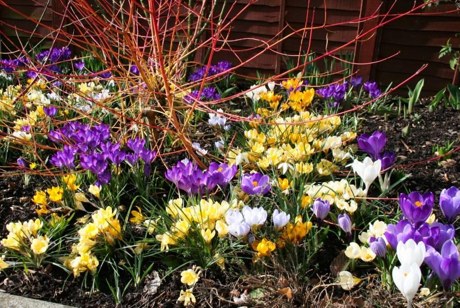 Как и когда высаживать цветы многолетники в открытый грунт