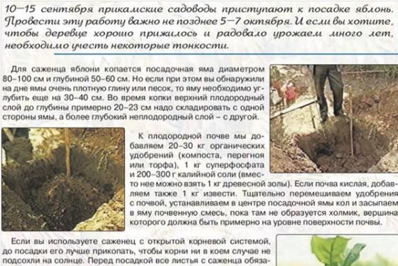 Крокусы: посадка и уход в открытом грунте, полив, подкормка - sadovnikam.ru