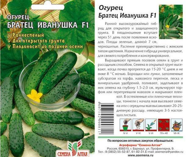 Огурец бьерн f1: отзывы, описание сорта, фото