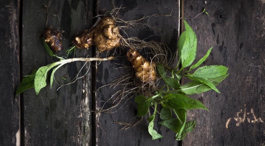 Топинамбур, или земляная груша: богатый и полезный урожай без затрат