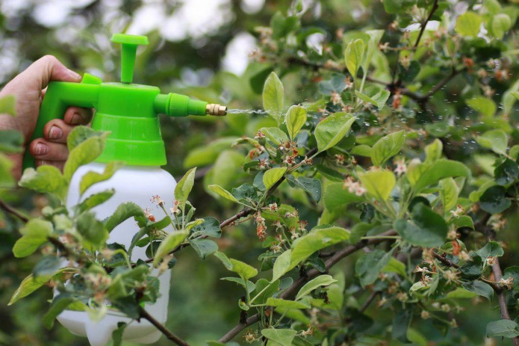 Весенняя обработка яблонь от болезней и вредителей: разбираемся, когда и чем опрыскивать деревья
